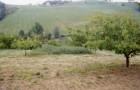 """Incontro tecnico Progetto """"Sviluppo e valorizzazione di produzioni agricole biodinamiche della Regione Emilia-Romagna"""""""