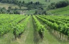 Incontro e visita guidata in ambito Summer School on Sustainable Enoviticulture (RA)